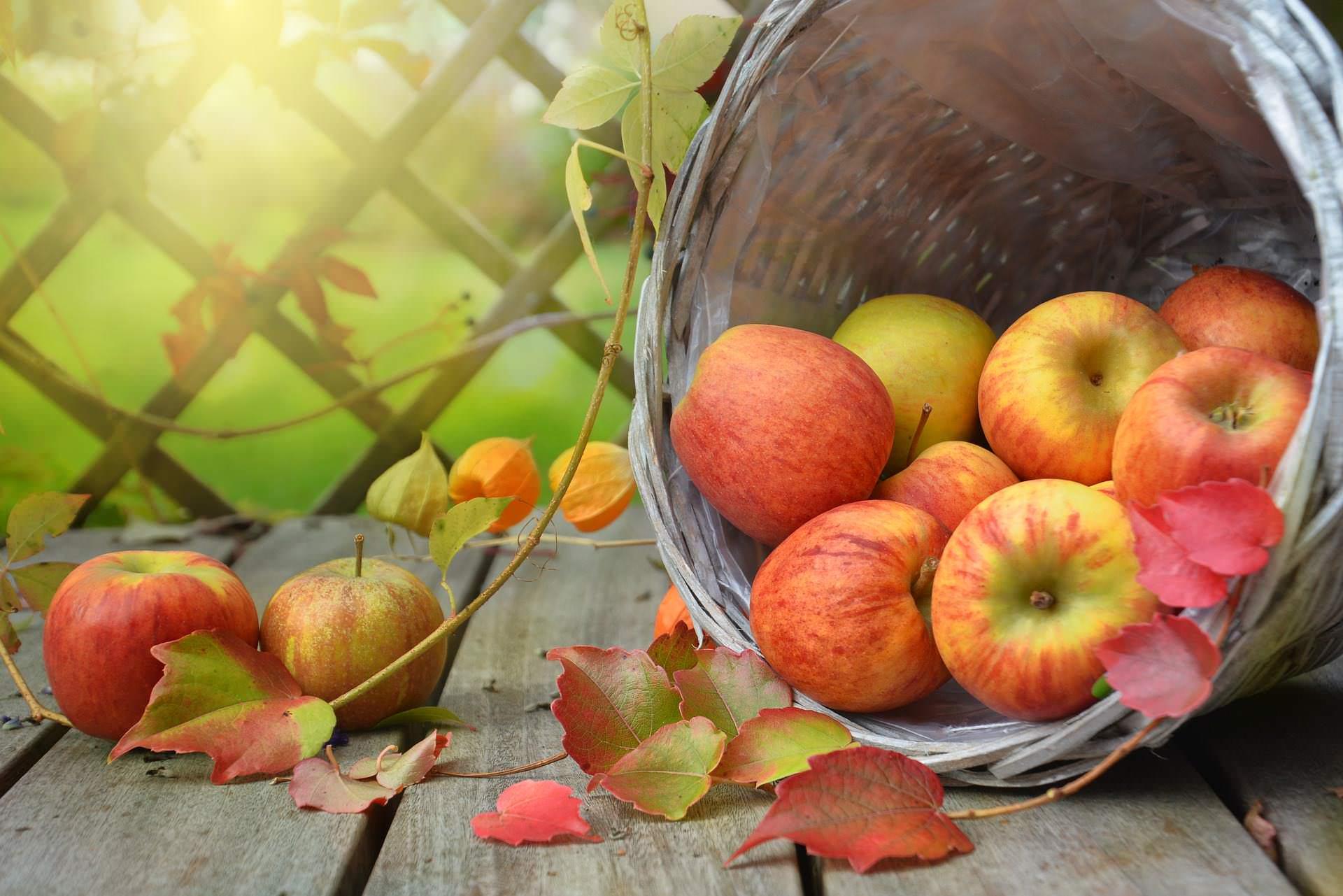 Alte Obstsorten: Apfel, Birne, Zwetschge und Quitte